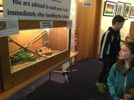 P6 visit the Reptile Show.